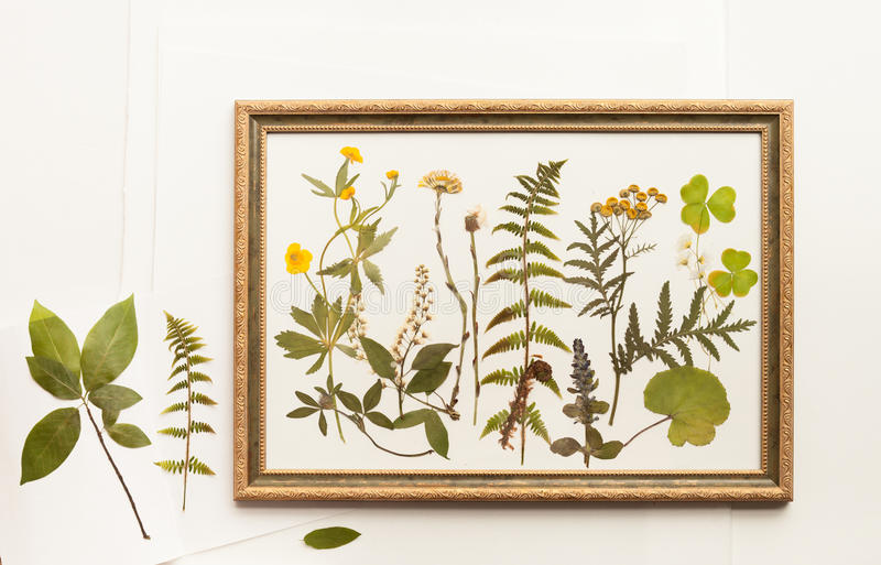 Dried forest plants for herbarium in frame stock images