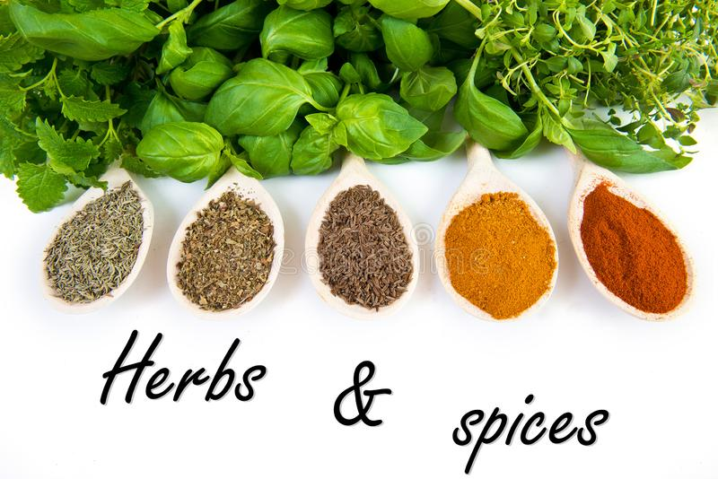 Dried and fresh spices stock photos