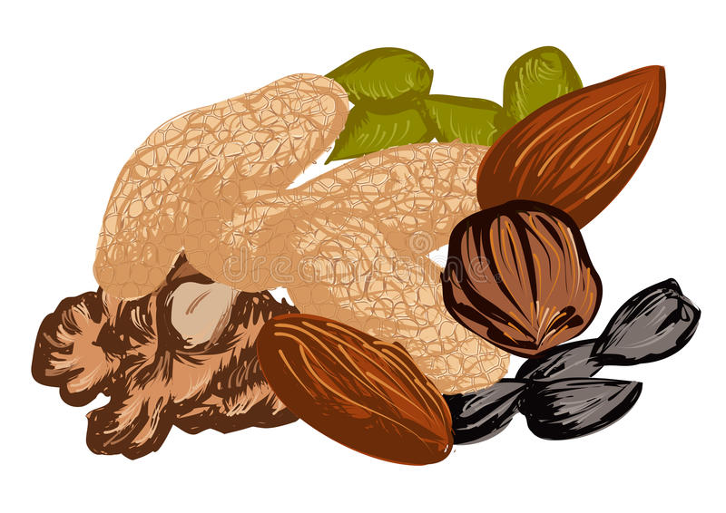 Dried fruit. On a white background vector illustration