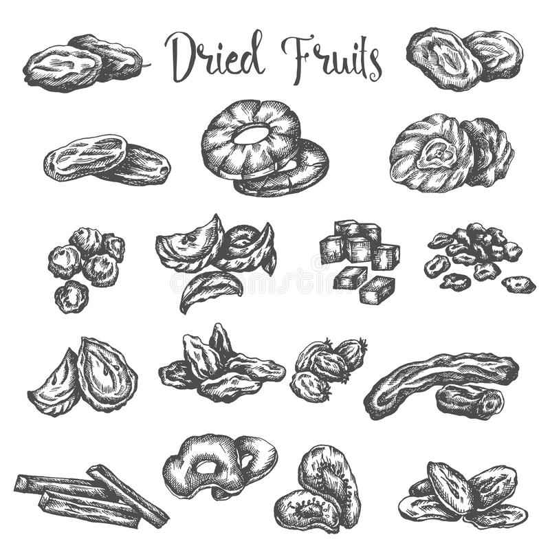 Dried fruits hand drawn illustration. Healthy snack Dry raisins, prunes and figs. Sketch of dehydrated pineapple. Apricot and coconut. Vector design for fruit vector illustration