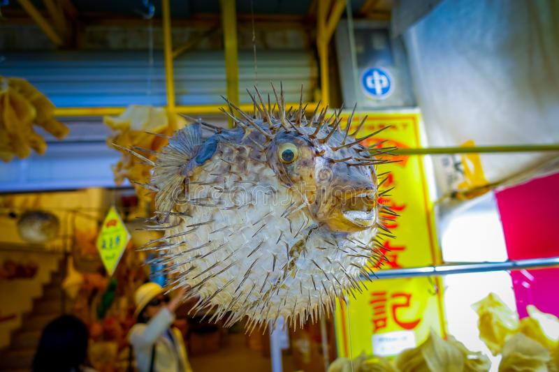 Dried fugu made by local people, in a market in hong kong royalty free stock photography