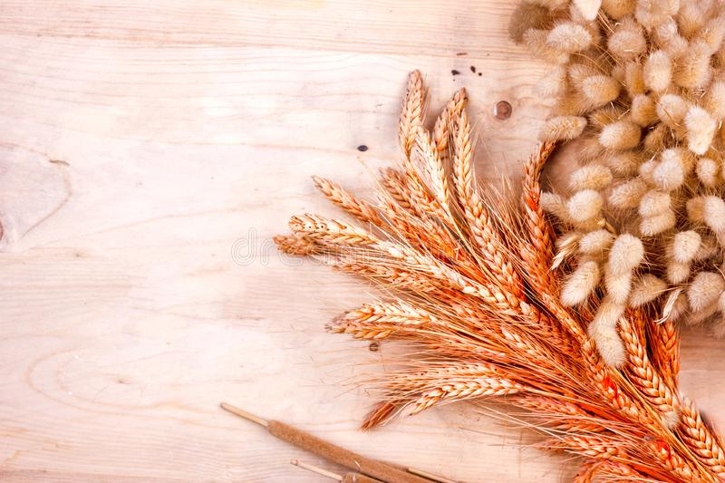 Dried grain ears and reeds on a wooden table. Autumn harvest of bread. Dried grain ears and reeds on wooden table. Autumn harvest of bread stock photo