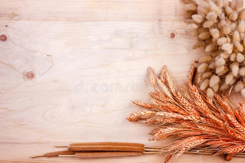 Dried grain ears and reeds on a wooden table. Autumn harvest of bread. Dried grain ears and reeds on wooden table. Autumn harvest of bread stock photos