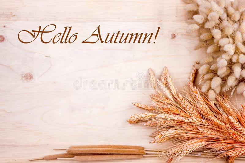 Dried grain ears and reeds on a wooden table. Autumn harvest of bread. Lettering Hello Autumn. Dried grain ears and reeds on wooden table. Autumn harvest of royalty free stock photography