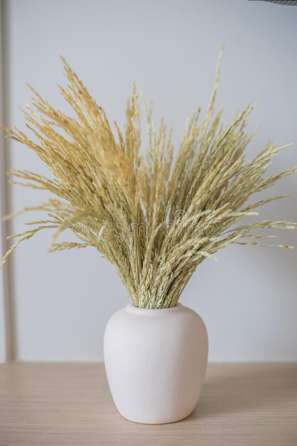 Dried grain. Rice on the vase stock images