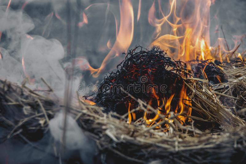 Dried Grass on Fire stock image