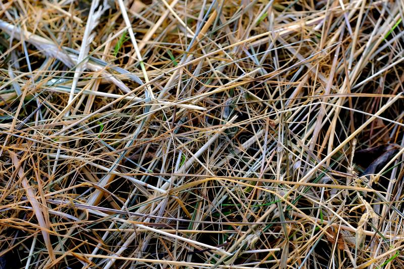 Dried grass, hay, mow. Close up photo of a hay or part of a haymow. You may see closely dried almost colorless grass, small pieces of leafs, even some insects stock images