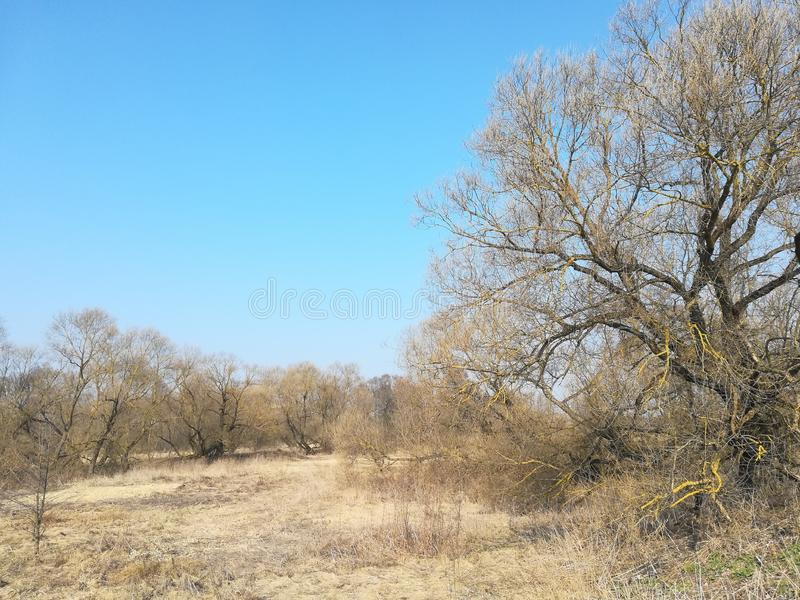 Dried grass in the sun with trees against the blue sky. Sunny day in the village stock images