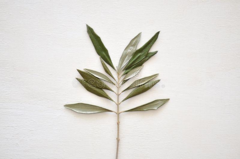 Dried green leaf stock images