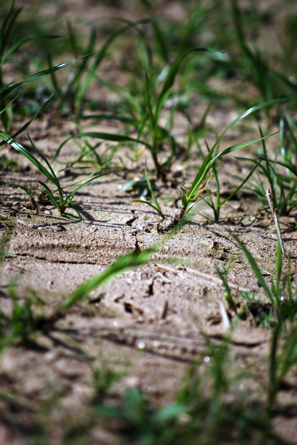 Download Dried ground stock photo. Image of loam, plant, erosion - 9049690