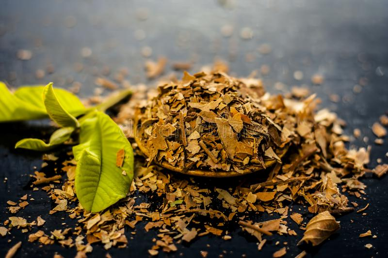 Dried Guava leaves. Dried Crushed guava leaves with fresh green guava leaves on a wooden surface. It helps to reduce weight, Dengue Fever etc stock image