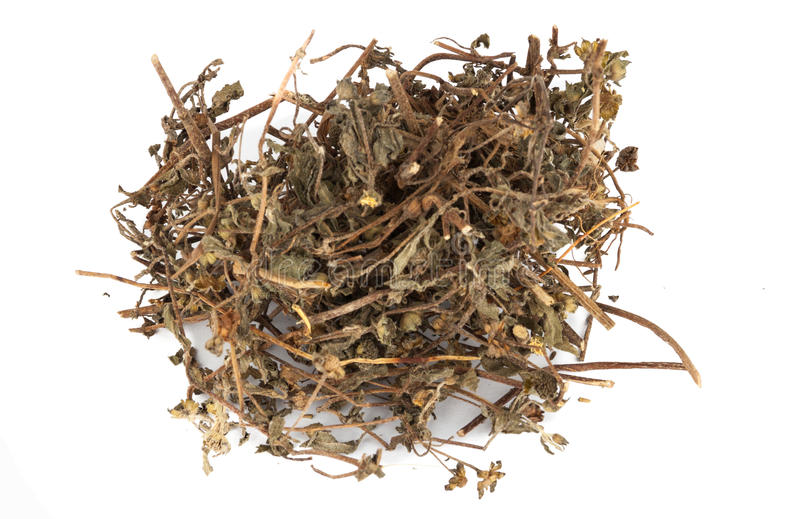 Dried Han Lian Cao or Eclipta Prostrata. Being its botanical name, one of the common ingredients of traditional Chinese herbs stock photo