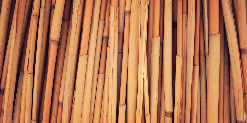 Dried haulm texture. Aged photo. Bamboo like grass close up. Yellow straw surface. Haulm umbrella macro photo. Antalya Province, Turkey royalty free stock photography