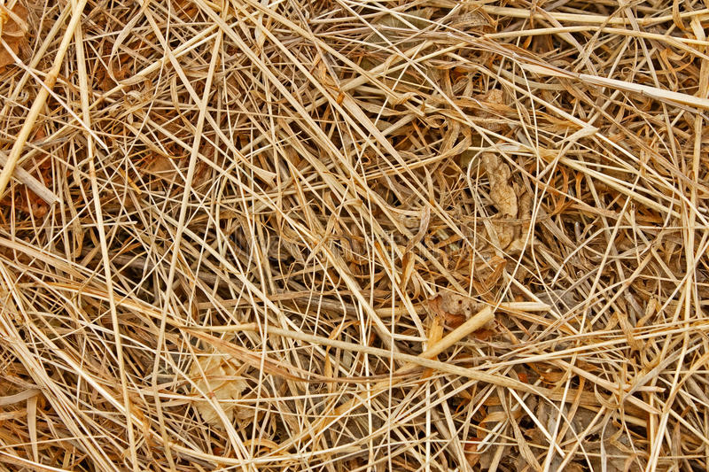 Dried hayDried hay royalty free stock photo