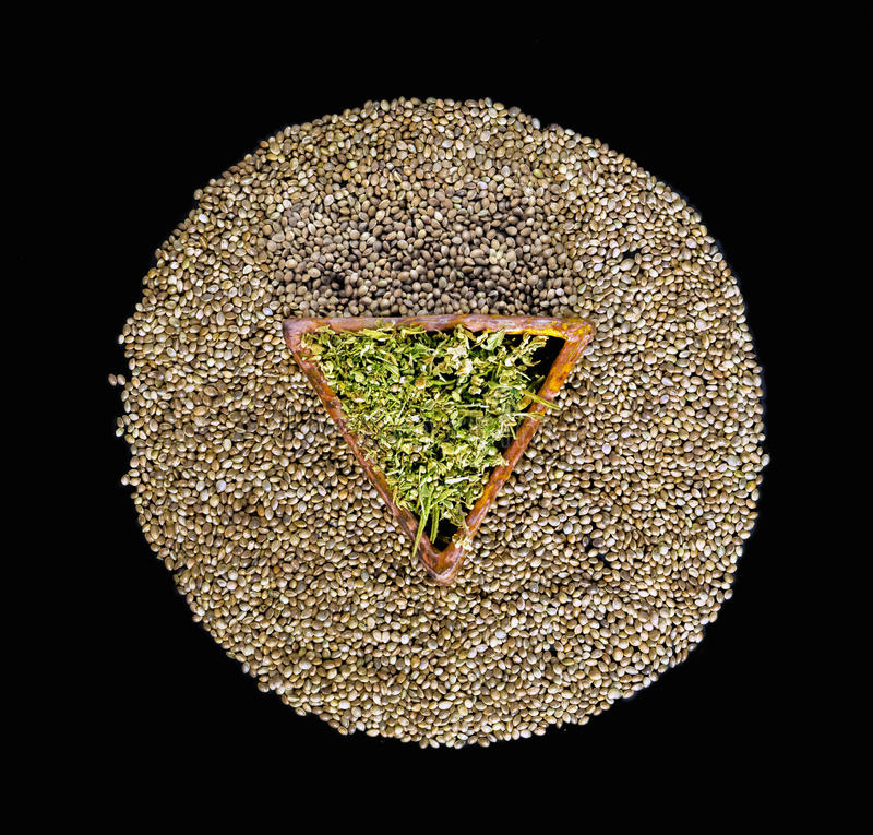 Dried hemp leaves in a triangular ceramic saucer. On a circle of hemp seeds in a black background royalty free stock photos