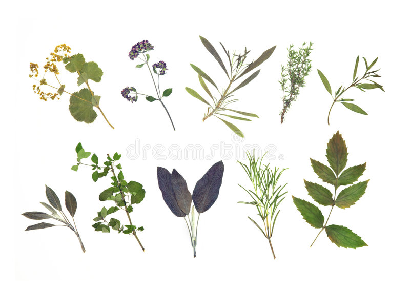 Dried Herb Leaf Selection. Dried pressed herb leaf abstract, over white background stock photos