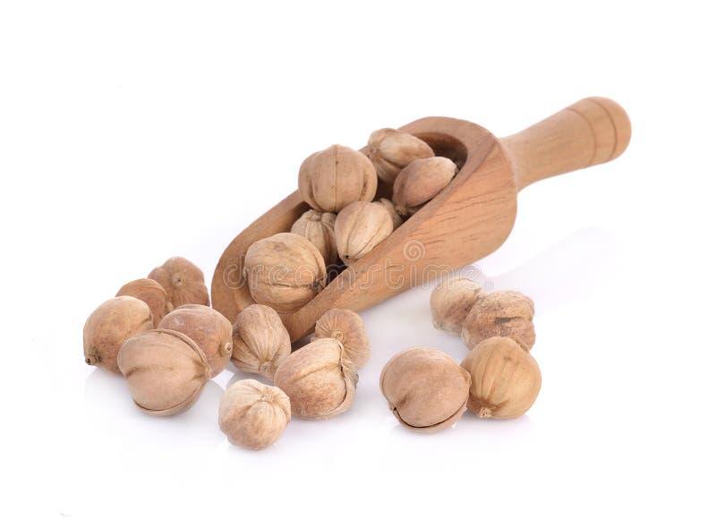 Dried Herbs,Amomum krervanh Pierre,Siam Cardamom, Best Cardamom, Clustered Cardamom, Camphor Seed,Zingiberaceae.  royalty free stock photography
