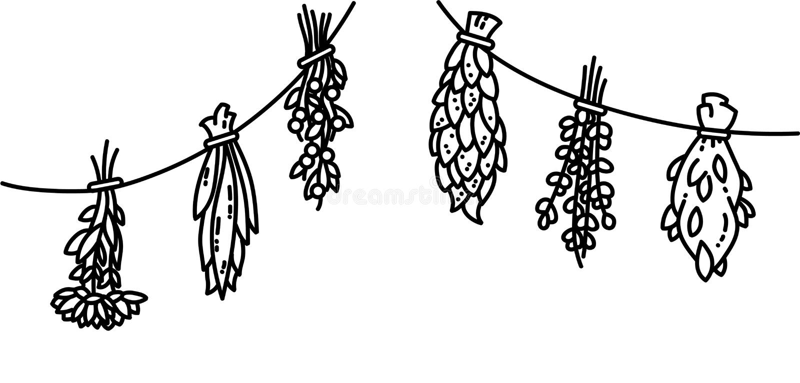 Dried herbs flat vector style black and white ornament stock illustration