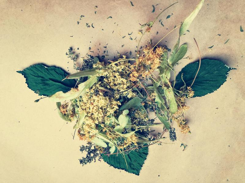 Dried herbs on paper. Dried herbs on brown paper royalty free stock images