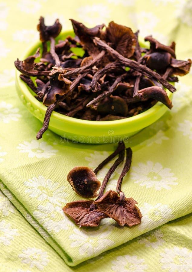 Free Dried Honey-fungus Royalty Free Stock Photo - 34695215