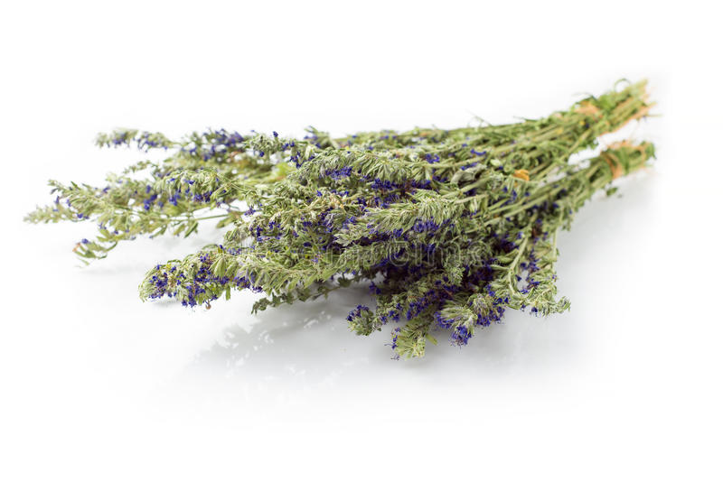 Dried hyssop twigs. Dried bunch of hyssop herb (Hyssopus officinalis) isolated on white stock image