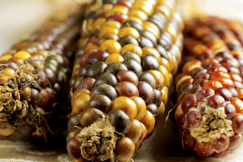 Dried Indian Corn Stock Photos
