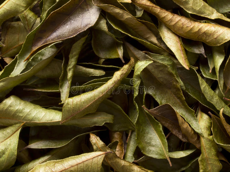 Download Dried indian curry leaves stock photo. Image of horizontal - 22559868