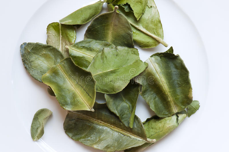Dried Kaffir Lime Leaves (Citrus hystrix) stock image