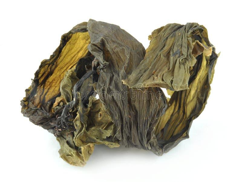 Dried kelp royalty free stock image