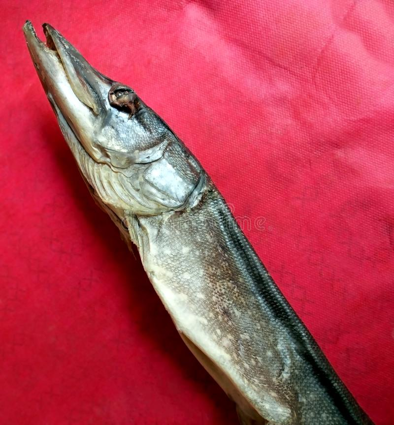 Dried lake pike on the table royalty free stock photography