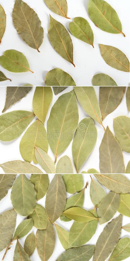 Bay leaf in assortment. royalty free stock image