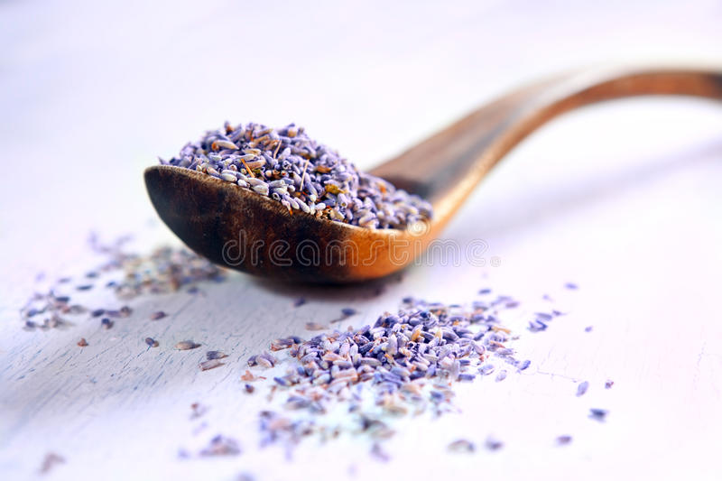Download Dried lavender stock image. Image of plant, organic, nobody - 21977953