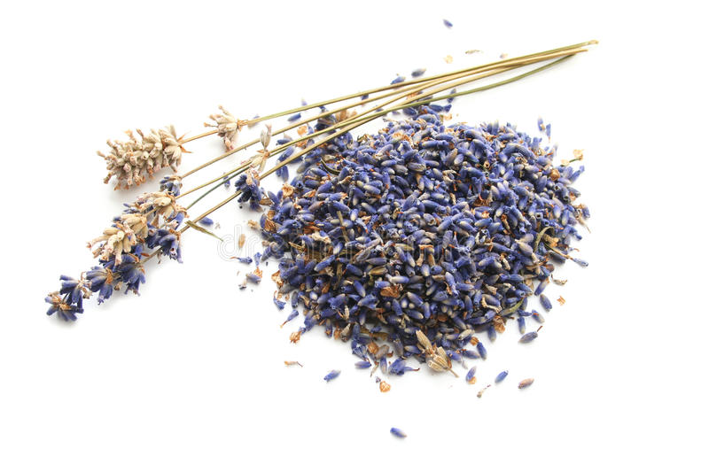 Dried Lavender Stems and Buds stock image