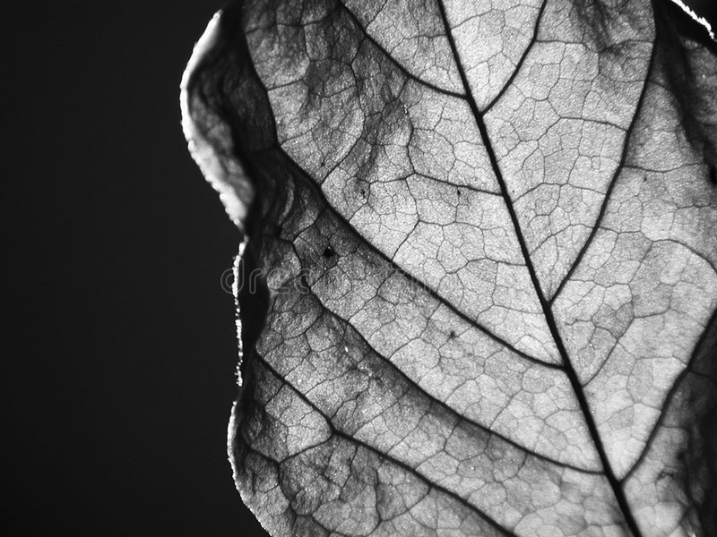 Download Dried leaf close-up stock image. Image of winter, black - 19663