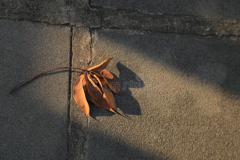 Dried leaf fall on ground with sunlight beam. royalty free stock image