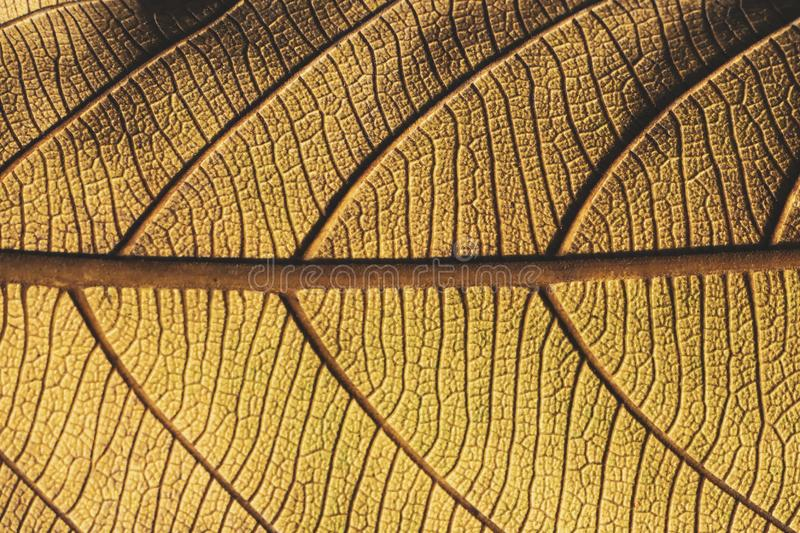 Extreme close-up macro of an autumn leaf with fine detail royalty free stock images