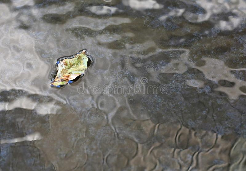 Dried leaf floating on ripple surface of water in pond background stock photos