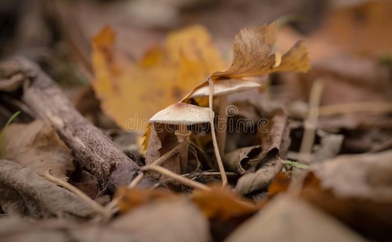 Dried Leaves stock image