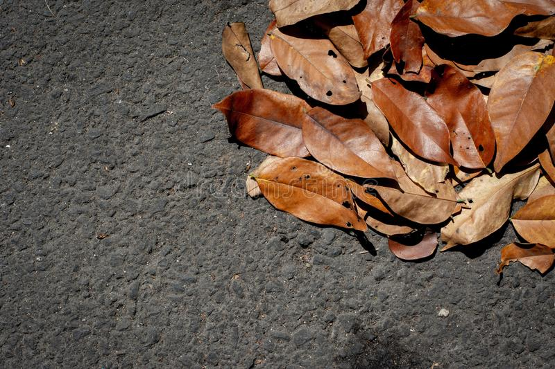 Dried leaves. Brown dried leaves falling on the streets stock image