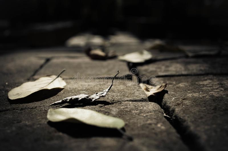 Dried leaves on the floor. Dried leaves on concrete floor under the sunlight stock photography