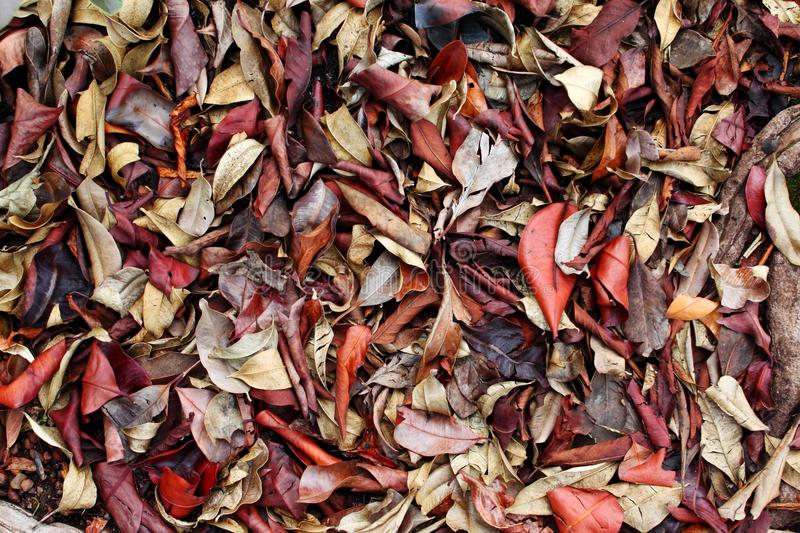 Dried Leaves stock images