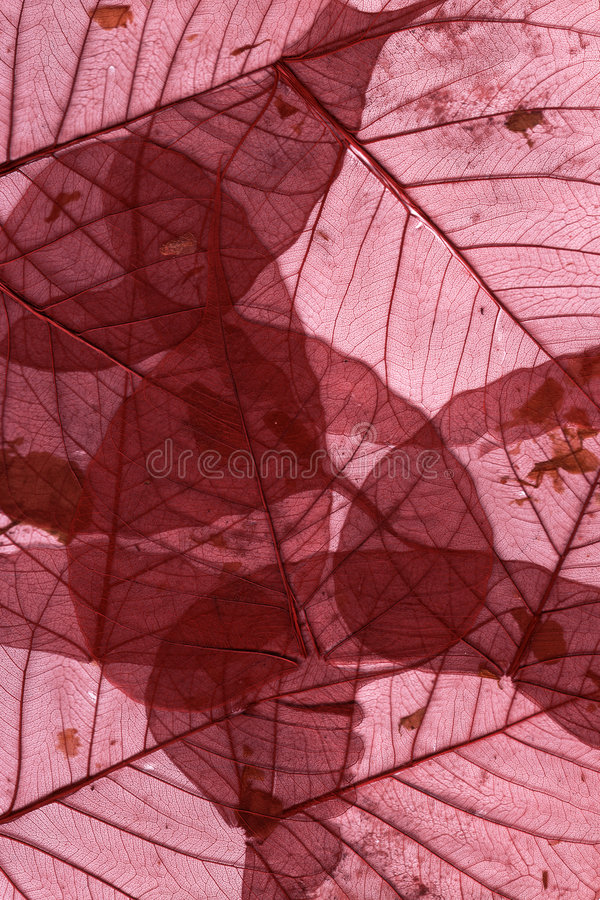 Dried Leaves macro - red stock image