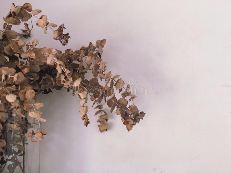 Dried leaves with white wall. Brown leaves on white background.Vintage wallpaper royalty free stock images