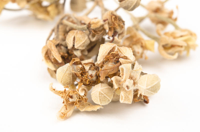 Download Dried Linden stock image. Image of heap, healing, care - 23940695