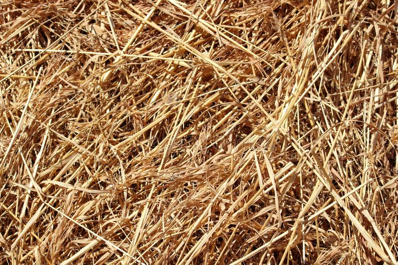 Dried long grass background royalty free stock images