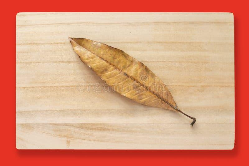 A dried mango leaf stock photography