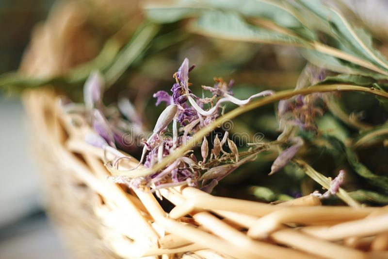 Dried medicinal herb  in a wicker basket. Dried medicinal herb of Ivan-tea in a wicker basket lit by the summer sun royalty free stock photography