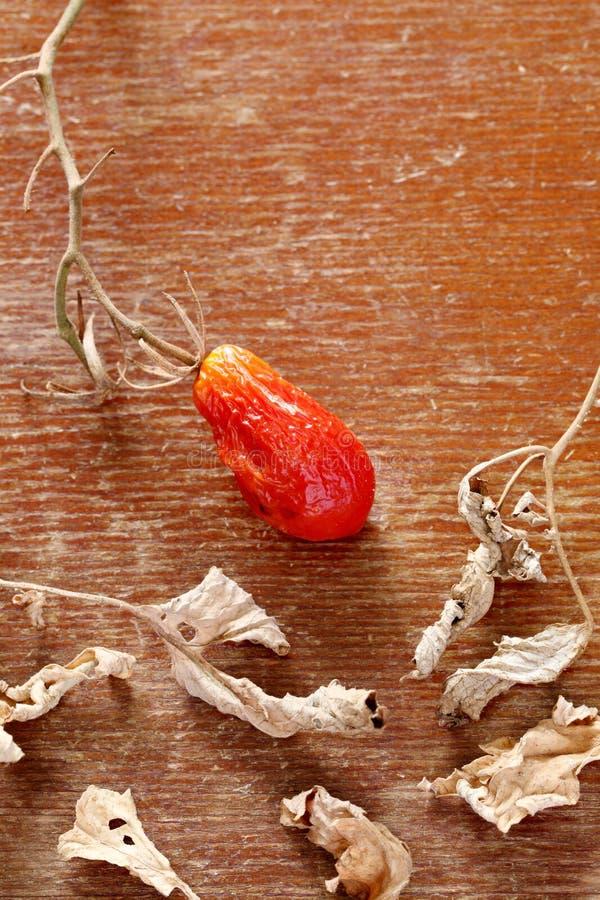Download Dried mini tomato stock photo. Image of orange, negative - 33137400