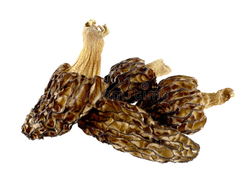 Dried morels on a white. Small group of dried morels on a white background stock photography