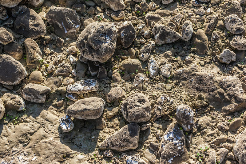 Download Dried mud stock photo. Image of pebble, dirty, rough - 31377810